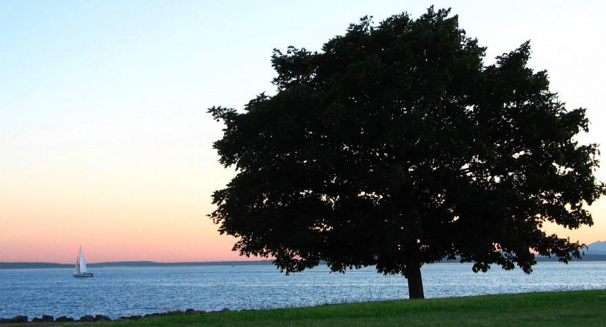 tree_slide